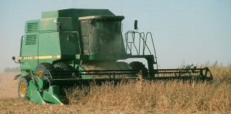 combining soybeans