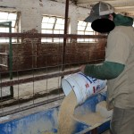 An inmate pours livestock feed.
