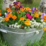 galvanized steel tub of flowers