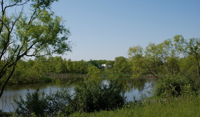 CRP restored wetland in Ohio