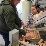Calame Poultry loading eggs w daughter