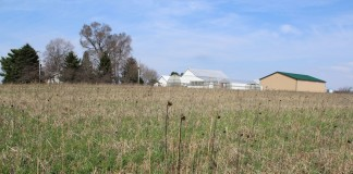 Mixed cover crops