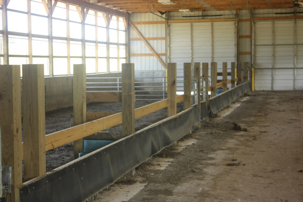 Sheep Farming With A Dairy Frame Of Mind Farm And Dairy
