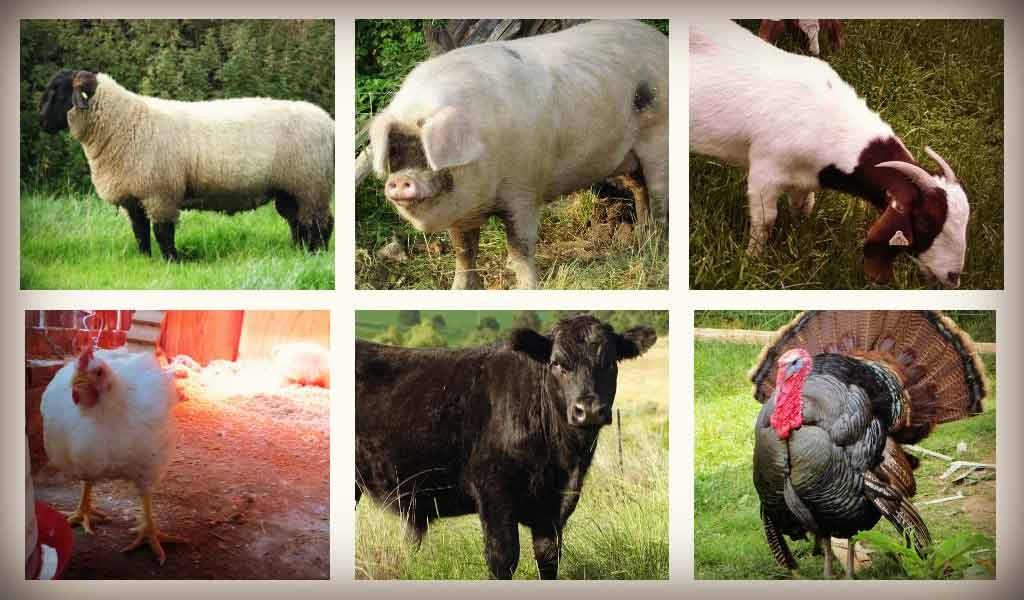 Selling meat direct: 5 sales channels for farmers - Farm and
