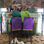 Grand champion chickens