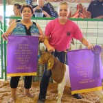 Grand champion market goat