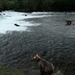 Brown bears at Brooks Falls, Katmai National Park, Alaska