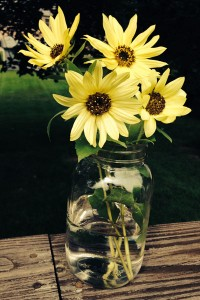 sunflowers in jar