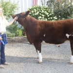 Columbiana reserve project steer copy