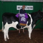 champion dairy steer