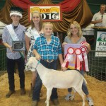Canfield reserve champion dairy goat
