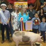 Canfield reserve champion hog