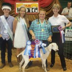 Canfield grand champion dairy goat
