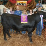 Canfield grand champion steer