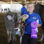 Junior Champion Brown Swiss