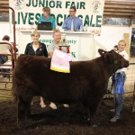 Geauga reserve champion steer