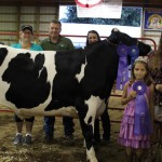 Stark champion dairy steer