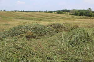 FSR drought forage