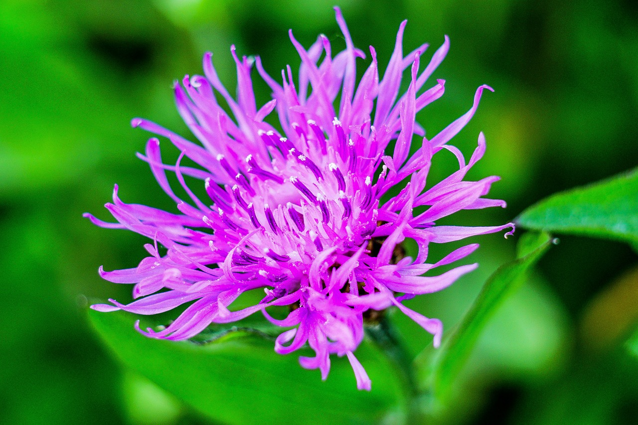 Report and take action on knapweed