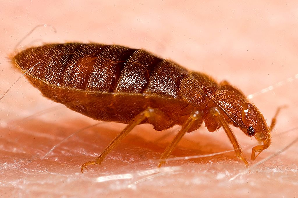 Choosing the Most Efficient Bed Bug Exterminator