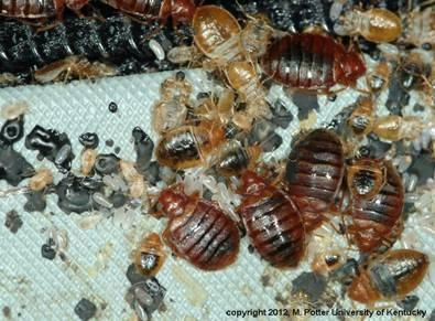 How To Detect Bed Bugs In A Mattress