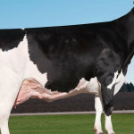 holstein record Ever-Green-View My Gold-ET
