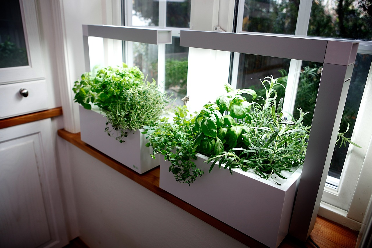 How to grow an indoor herb garden farm and dairy - Best herbs to grow indoors ...