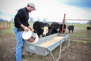 Draganic feeding heifers