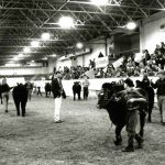 1995 Ohio Beef Expo cattle show