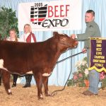 2005 Shorthorn ch female