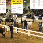 Expo breed shows