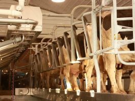 Dairy milking parlor/Farm and Dairy file photo