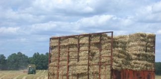 Noxious Weed Free Forage and Mulch