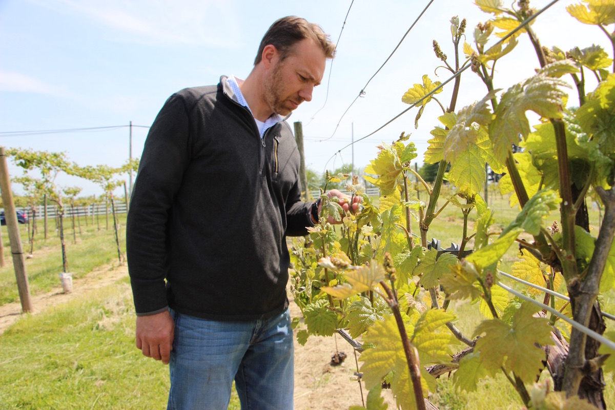 Andy Troutman checking grapes