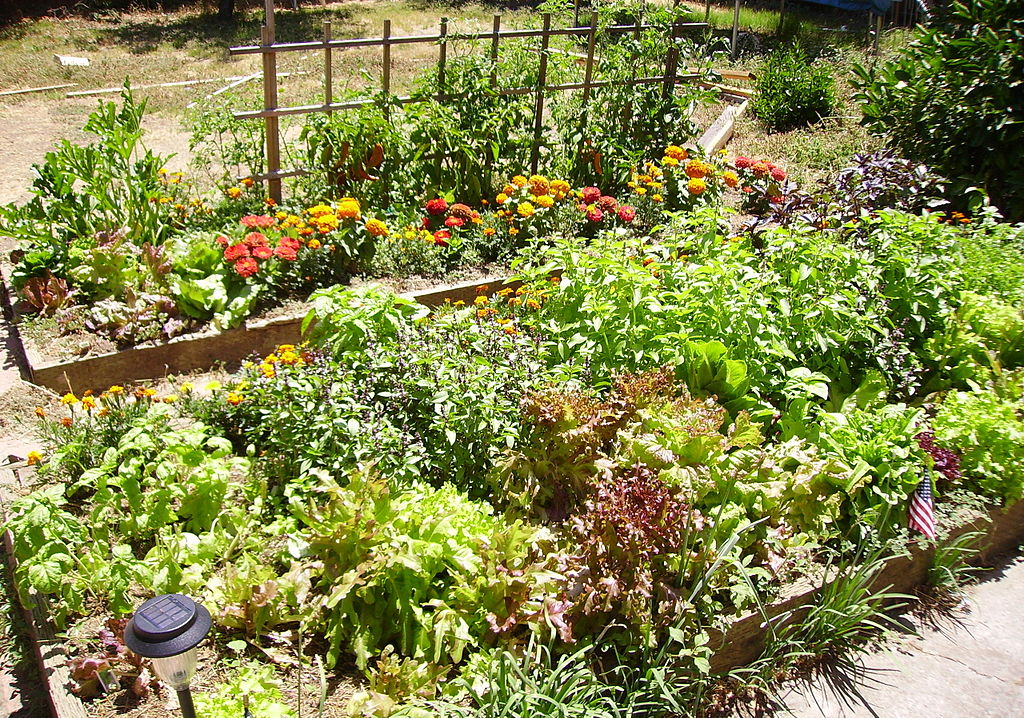 How To Build A Raised Bed Garden Farm And Dairy