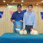 Grand champion chicken
