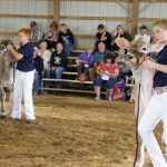 Brown Swiss show
