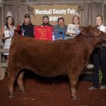 reserve champion steer