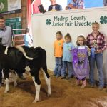 Medina County champion starter calf