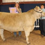 Lawrence reserve steer