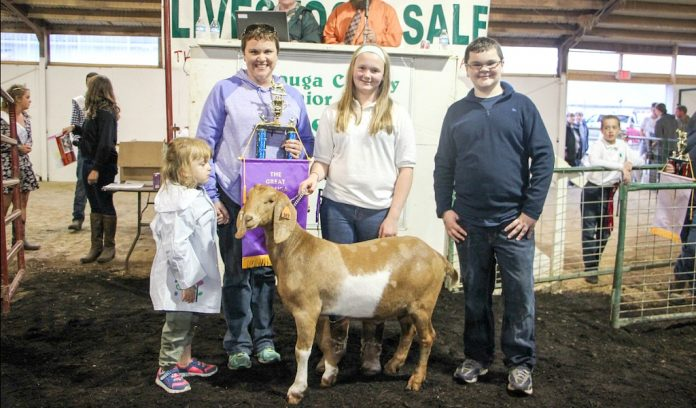 Geauga Fair champion goat