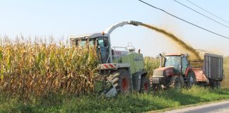 chopping corn silage