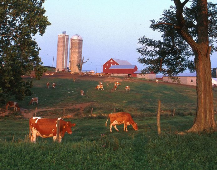 Farm and pasture