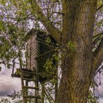 tree stand