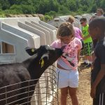 Girl and boy petting calf