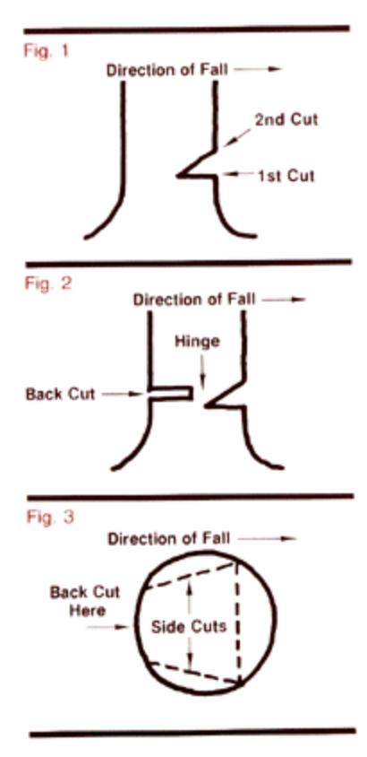 Udercut and backcut diagram