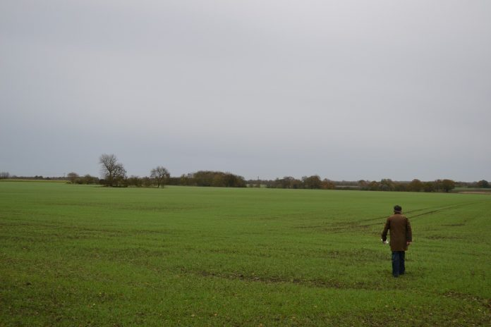 man walking in a field
