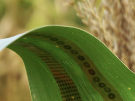 wearable sensors for plants