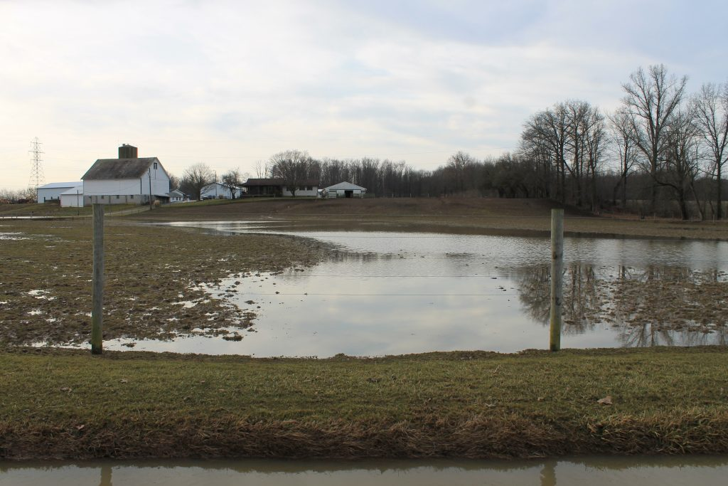 Pasture recovery following flooding - Farm and Dairy