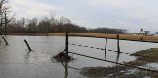 flooded pasture